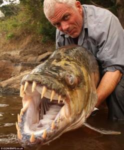 bigassfish